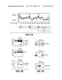 METHODS AND COMPOSITIONS FOR MODULATING APOPTOSIS diagram and image