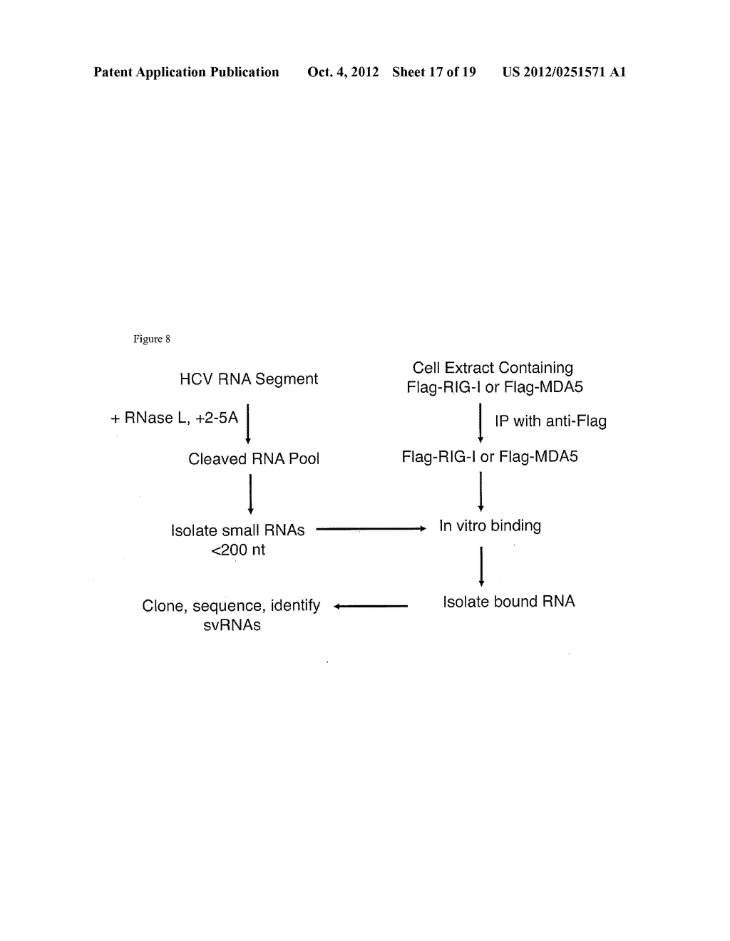 RNASE L-MEDIATED CLEAVAGE PRODUCTS AND USES THEREOF - diagram, schematic, and image 18