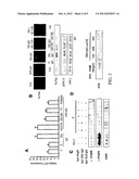 STIMULATORY AUTO-ANTIBODIES TO THE PDGF RECEPTOR AS PATHOLOGY MARKER AND     THERAPEUTIC TARGET diagram and image