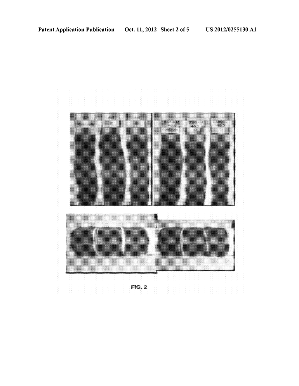 COMPOSITION FOR PERMANENT OR SEMIPERMANENT TINTING OF KERATIN FIBERS WITH     OIL-IN-GLYCOL LAMELLAR GEL - diagram, schematic, and image 03