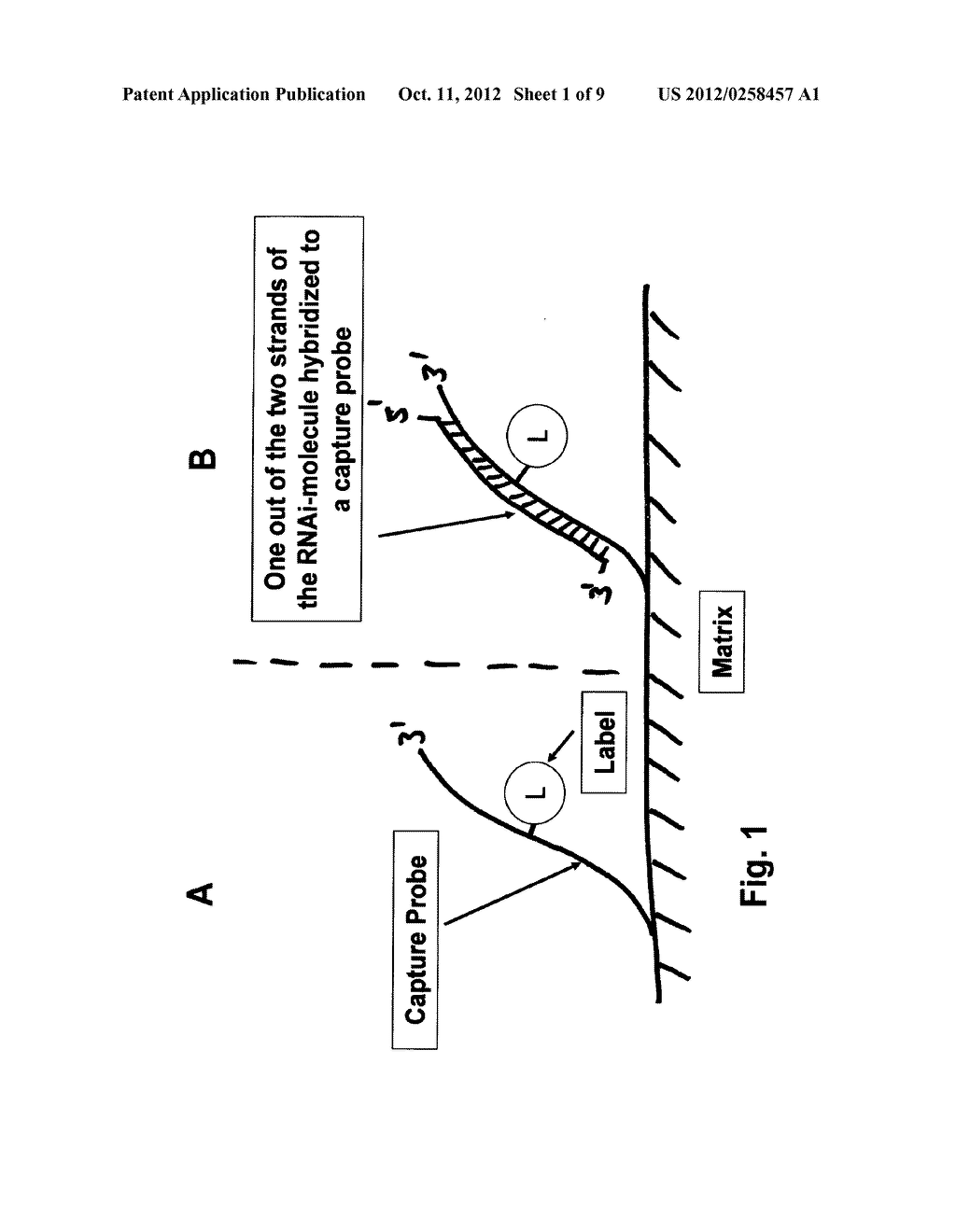 Methods for Detection of a Single- or Double-Stranded Nucleic Acid     Molecule - diagram, schematic, and image 02