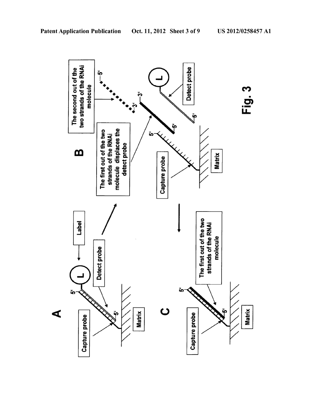 Methods for Detection of a Single- or Double-Stranded Nucleic Acid     Molecule - diagram, schematic, and image 04