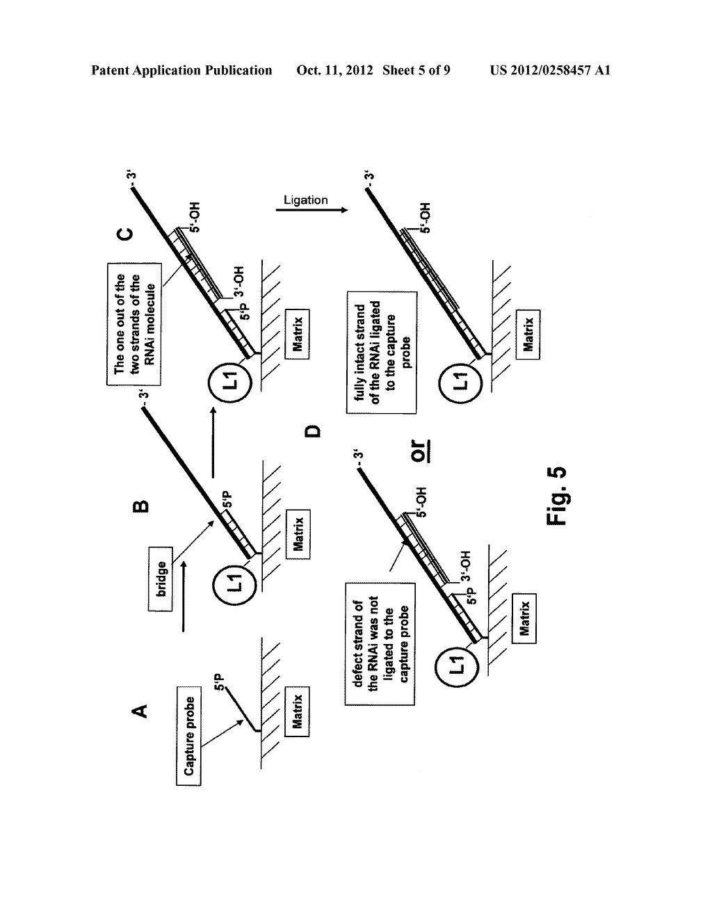 Methods for Detection of a Single- or Double-Stranded Nucleic Acid     Molecule - diagram, schematic, and image 06
