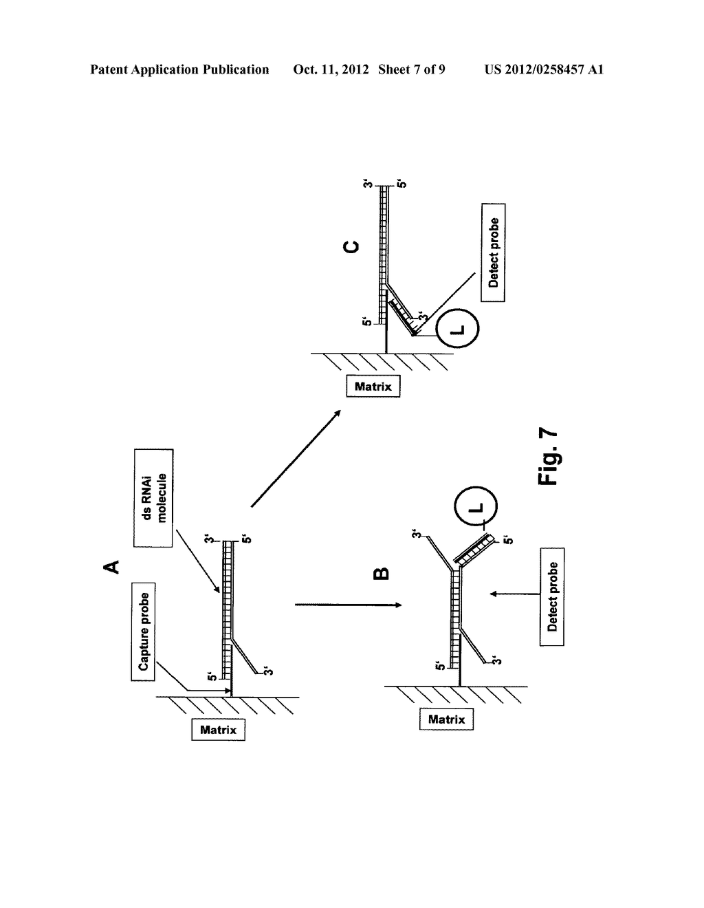 Methods for Detection of a Single- or Double-Stranded Nucleic Acid     Molecule - diagram, schematic, and image 08
