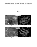 Functionalized Nanodiamond Reinforced Biopolymers diagram and image