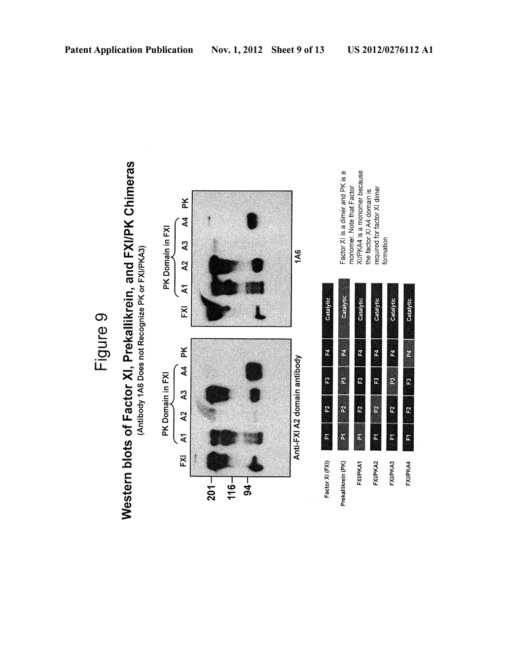 ANTI-FACTOR XI MONOCLONAL ANTIBODIES AND METHODS OF USE THEREOF - diagram, schematic, and image 10