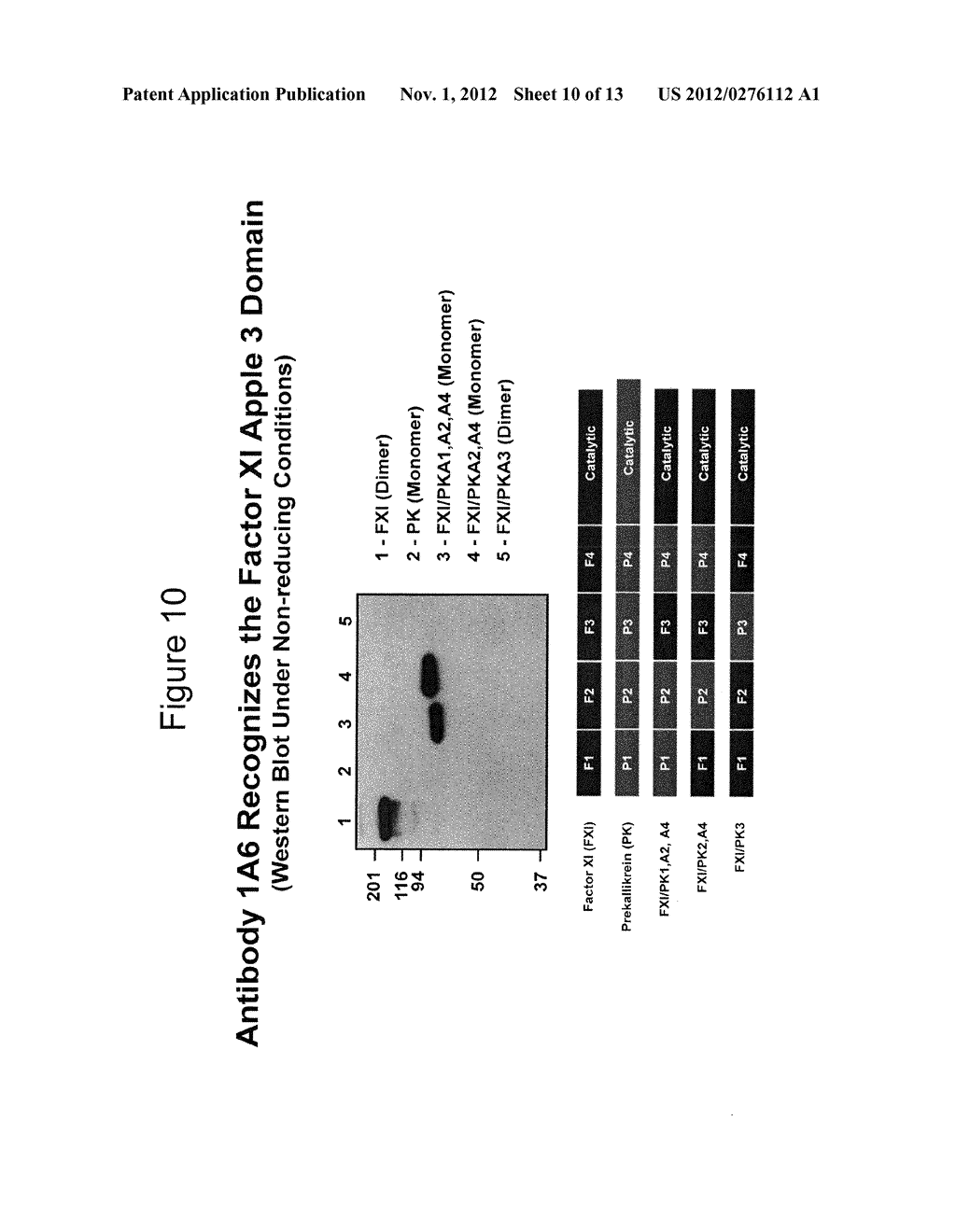 ANTI-FACTOR XI MONOCLONAL ANTIBODIES AND METHODS OF USE THEREOF - diagram, schematic, and image 11