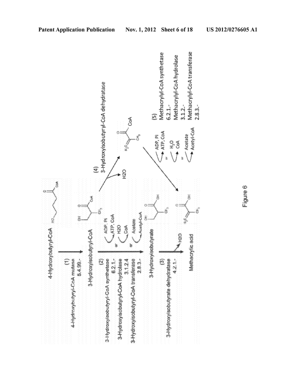 MICROORGANISMS FOR THE PRODUCTION OF METHACRYLIC ACID - diagram, schematic, and image 07