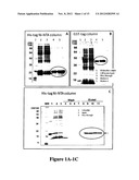 HIGH THROUGHPUT CELL-BASED HPV IMMUNOASSAYS FOR DIAGNOSIS AND SCREENING OF     HPV-ASSOCIATED CANCERS diagram and image