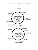 EXPRESSION VECTOR SUITABLE FOR EXPRESSION OF A CODING SEQUENCE FOR GENE     THERAPY diagram and image