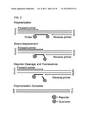 PRIMERS AND PROBES FOR DETECTION AND DISCRIMINATION OF TYPES AND SUBTYPES     OF INFLUENZA VIRUSES diagram and image