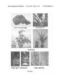 Plants With Useful Traits and Related Methods diagram and image