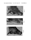 IMAGE ANALYSIS FOR DETERMINING CHARACTERISTICS OF ANIMALS diagram and image
