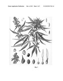 Marked Cannabis For Indicating Medical Marijuana diagram and image