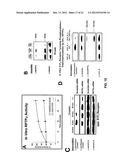 Modulation of Cell Barrier Dysfunction diagram and image