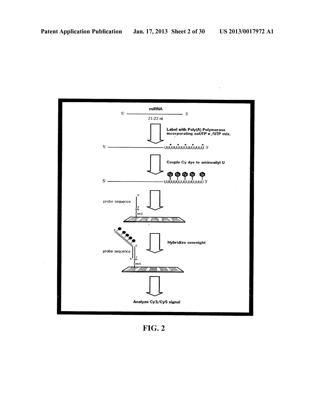 METHOD AND COMPOSITIONS INVOLVING MICRORNA - diagram, schematic, and image 03