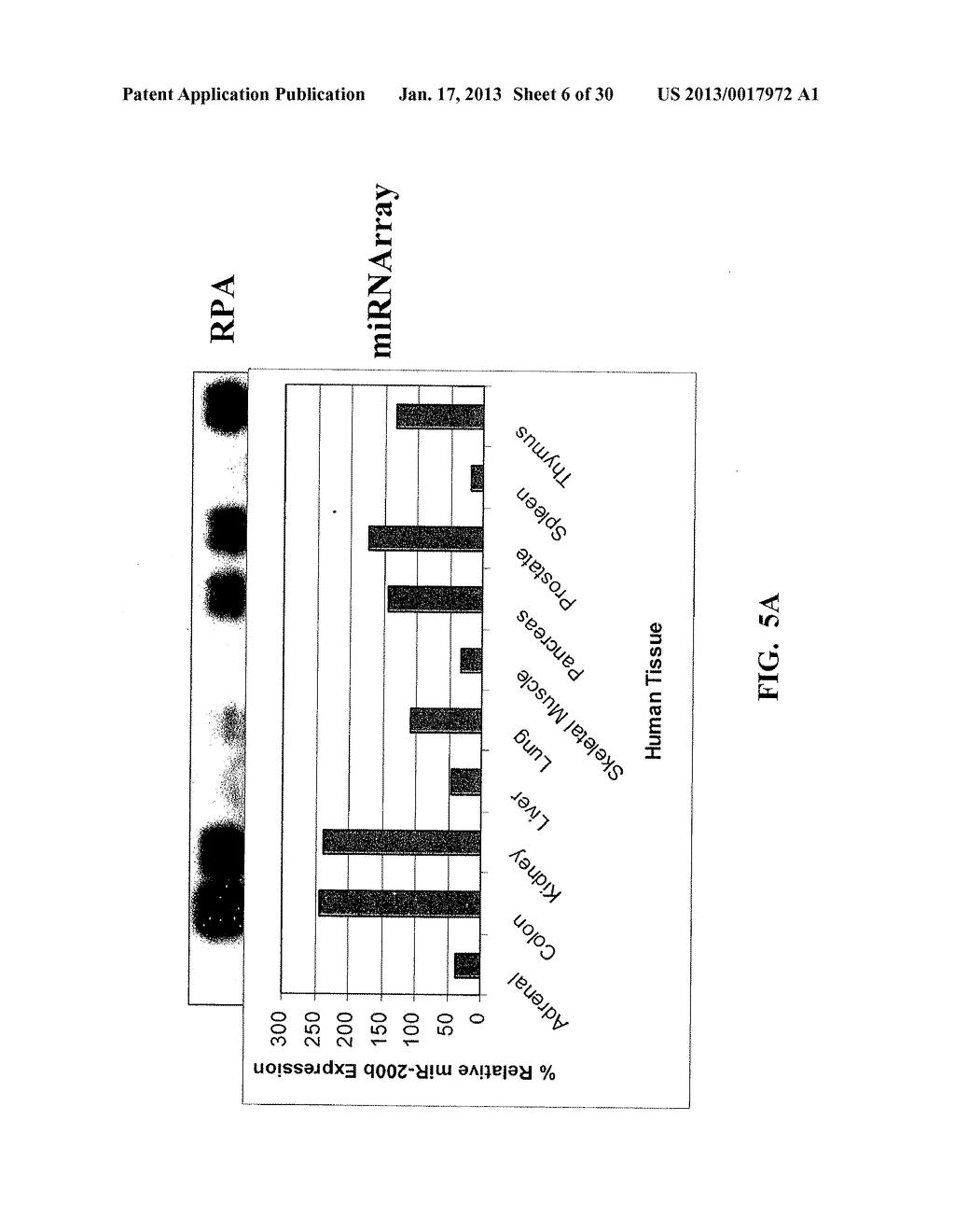 METHOD AND COMPOSITIONS INVOLVING MICRORNA - diagram, schematic, and image 07