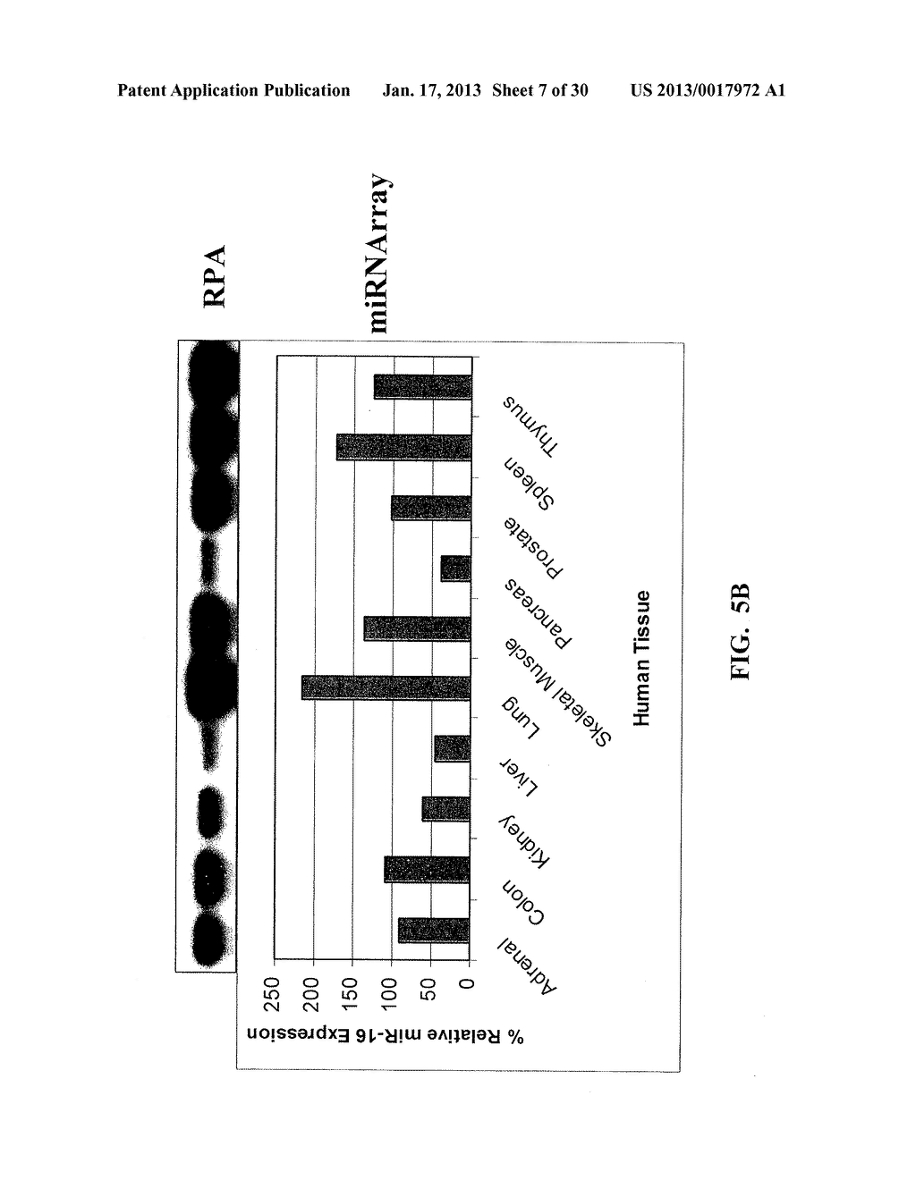 METHOD AND COMPOSITIONS INVOLVING MICRORNA - diagram, schematic, and image 08