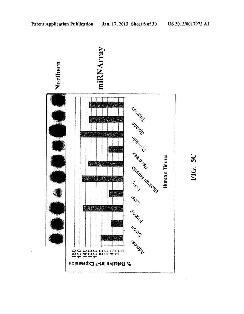 METHOD AND COMPOSITIONS INVOLVING MICRORNA - diagram, schematic, and image 09