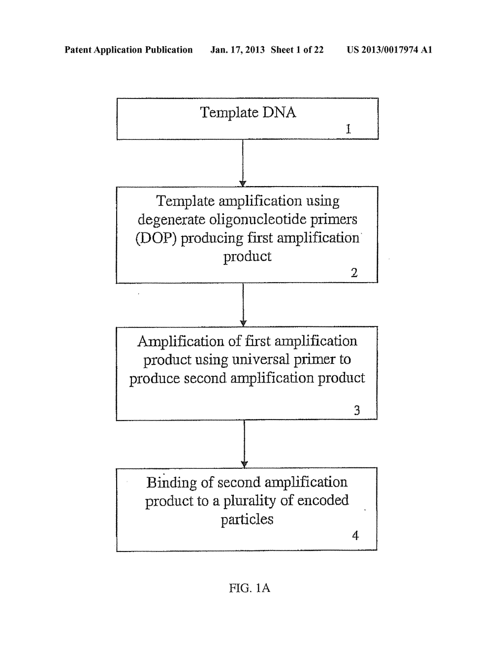 METHODS AND COMPOSITIONS RELATING TO MULTIPLEX GENOMIC GAIN AND LOSS     ASSAYS - diagram, schematic, and image 02