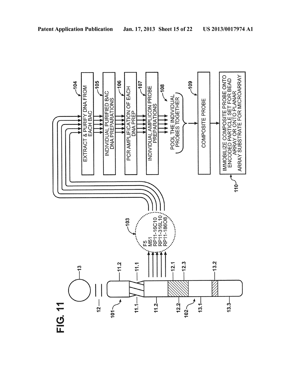 METHODS AND COMPOSITIONS RELATING TO MULTIPLEX GENOMIC GAIN AND LOSS     ASSAYS - diagram, schematic, and image 16