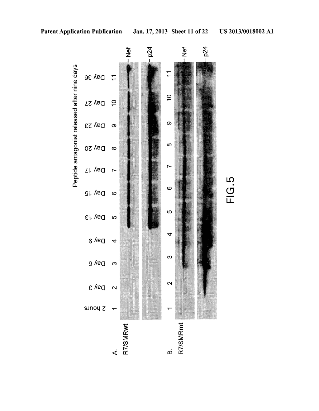 COMPOSITIONS AND METHODS FOR TREATING AIDS OR CANCER BY INHIBITING THE     SECRETION OF MICROPARTICLES - diagram, schematic, and image 12