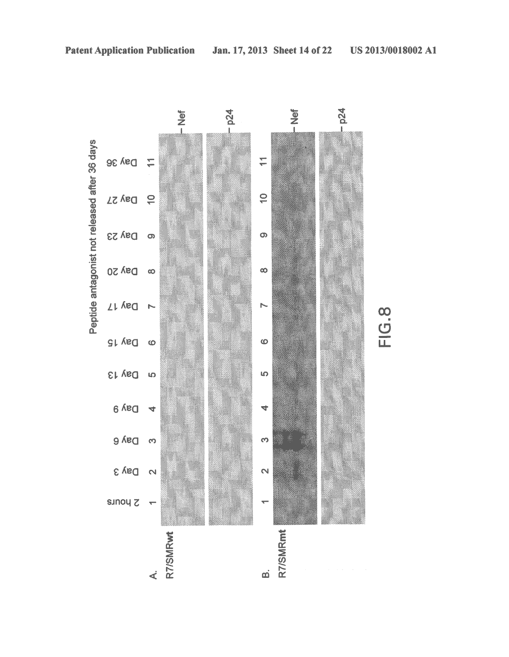 COMPOSITIONS AND METHODS FOR TREATING AIDS OR CANCER BY INHIBITING THE     SECRETION OF MICROPARTICLES - diagram, schematic, and image 15