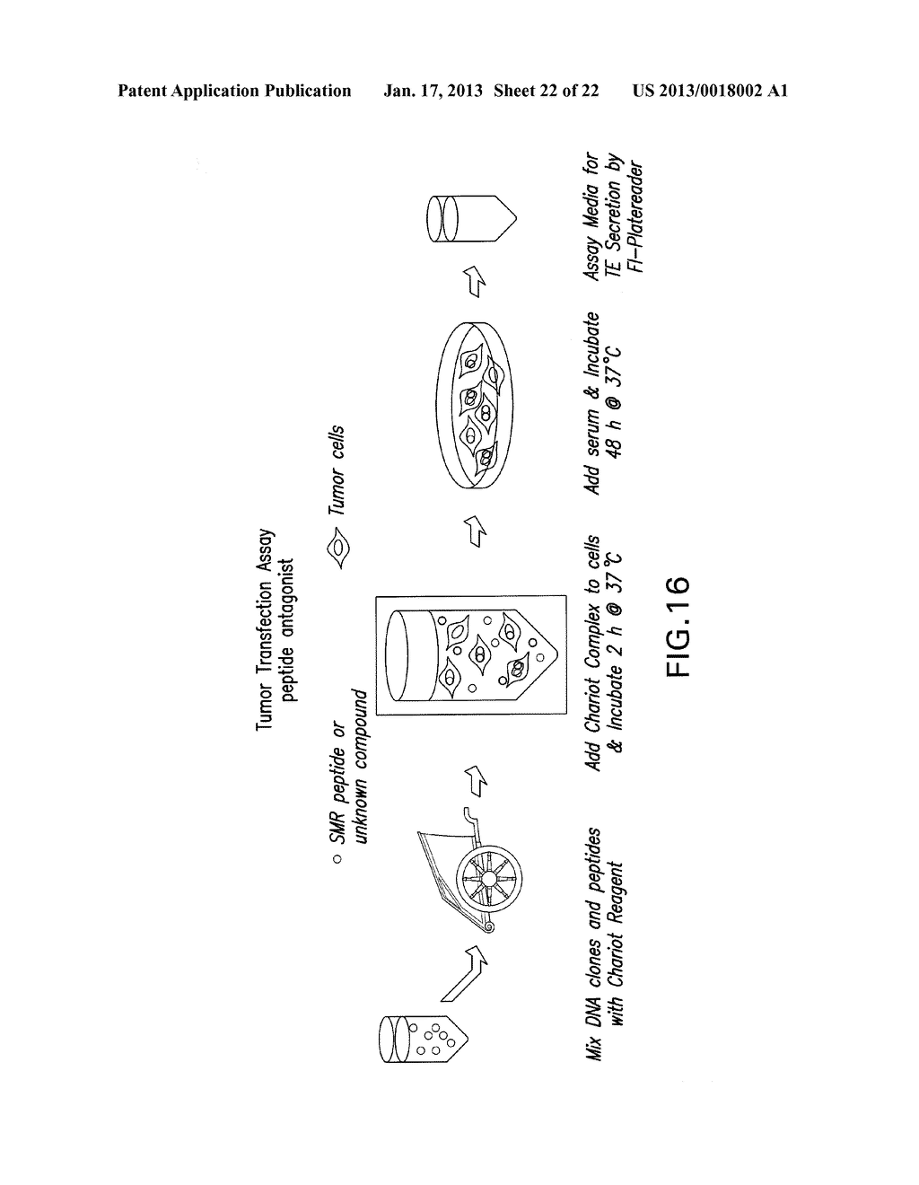 COMPOSITIONS AND METHODS FOR TREATING AIDS OR CANCER BY INHIBITING THE     SECRETION OF MICROPARTICLES - diagram, schematic, and image 23