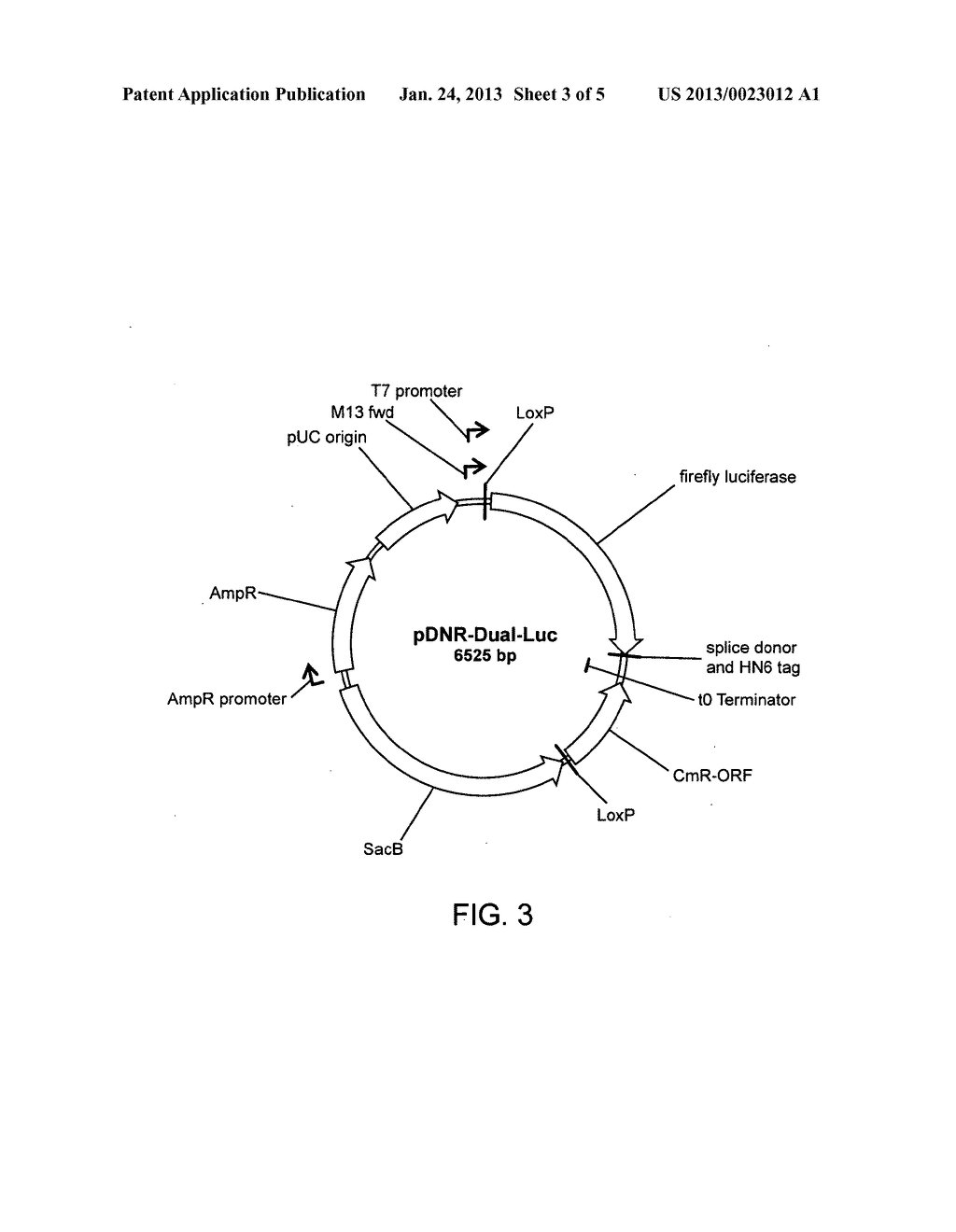 Recombinase-Based Methods for Producing Expression Vectors and     Compositions for Use in Practicing the Same - diagram, schematic, and image 04