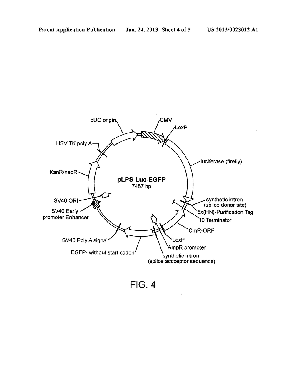 Recombinase-Based Methods for Producing Expression Vectors and     Compositions for Use in Practicing the Same - diagram, schematic, and image 05