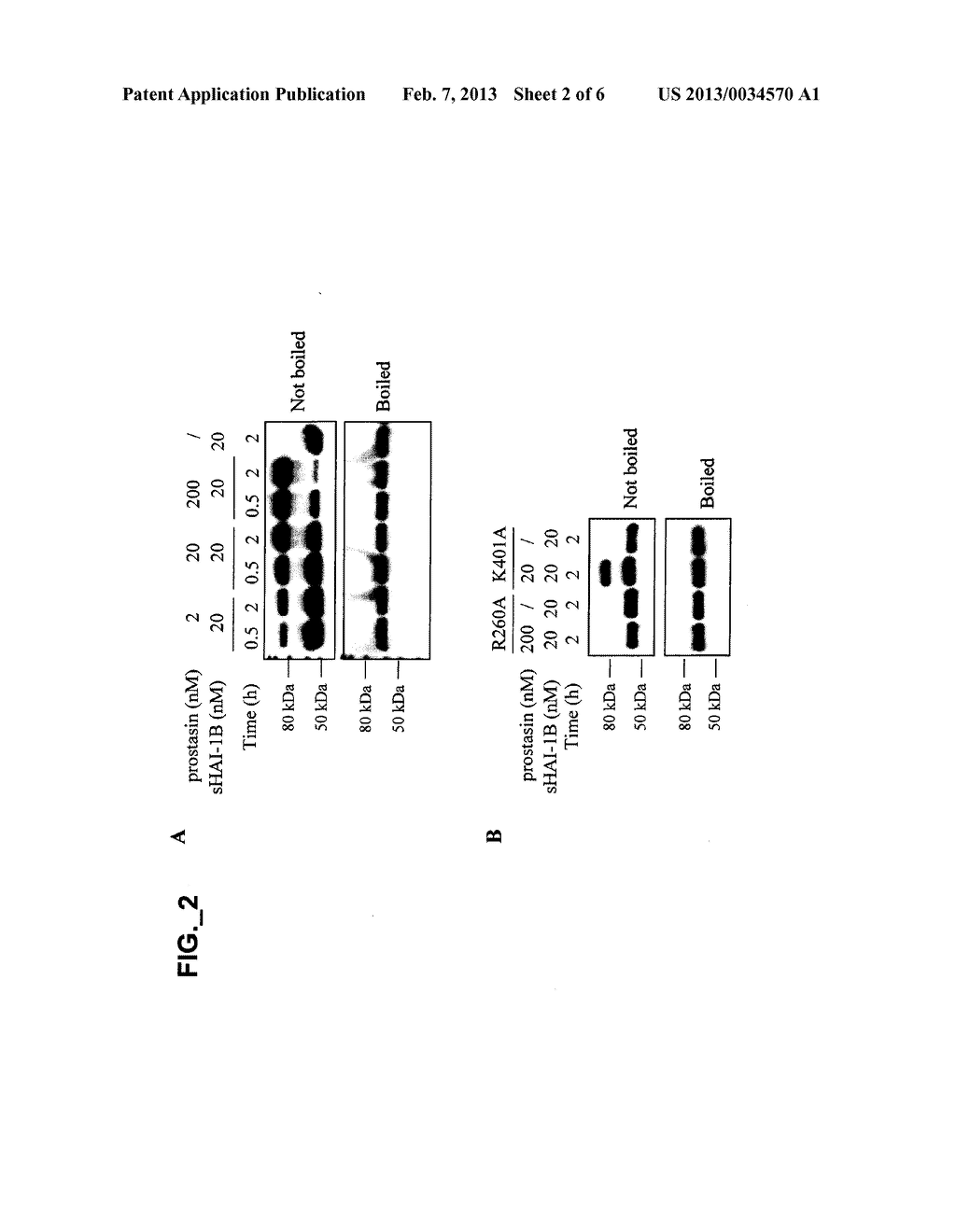 METHODS AND COMPOSITIONS FOR MODULATING PROSTASIN - diagram, schematic, and image 03