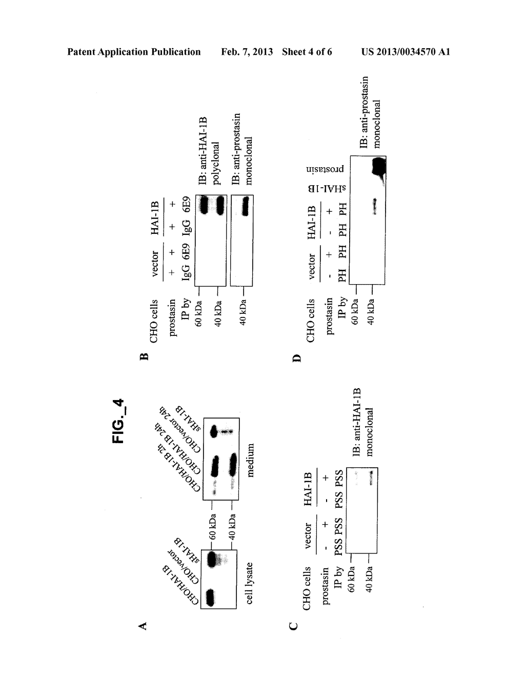 METHODS AND COMPOSITIONS FOR MODULATING PROSTASIN - diagram, schematic, and image 05