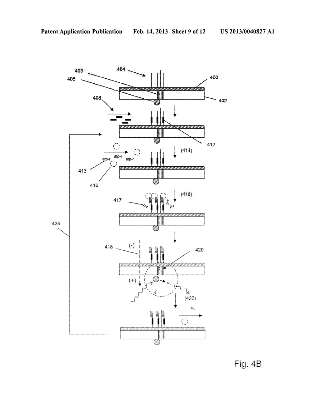 METHOD AND COMPOSITIONS FOR DETECTING AND SEQUENCING NUCLEIC ACIDS - diagram, schematic, and image 10