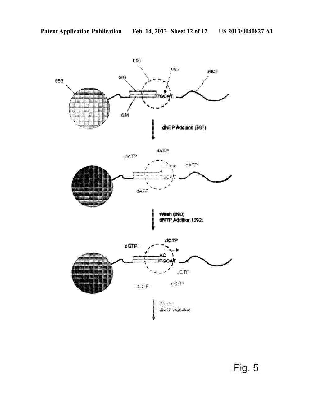 METHOD AND COMPOSITIONS FOR DETECTING AND SEQUENCING NUCLEIC ACIDS - diagram, schematic, and image 13