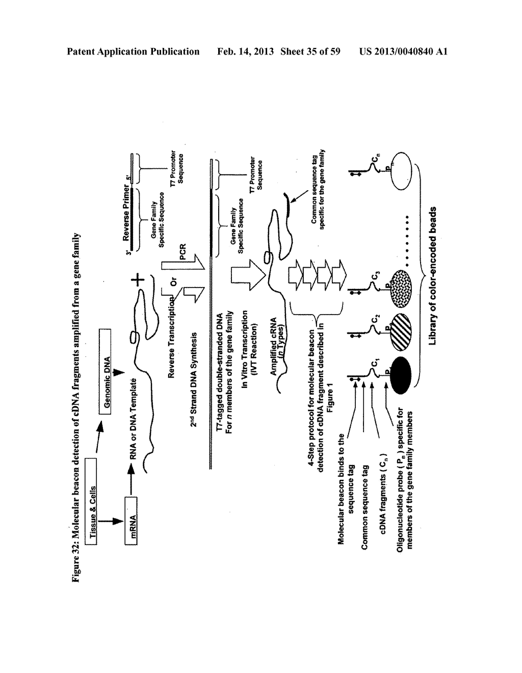 NUCLEIC ACID AMPLIFICATION WITH INTEGRATED MULTIPLEX DETECTION - diagram, schematic, and image 36