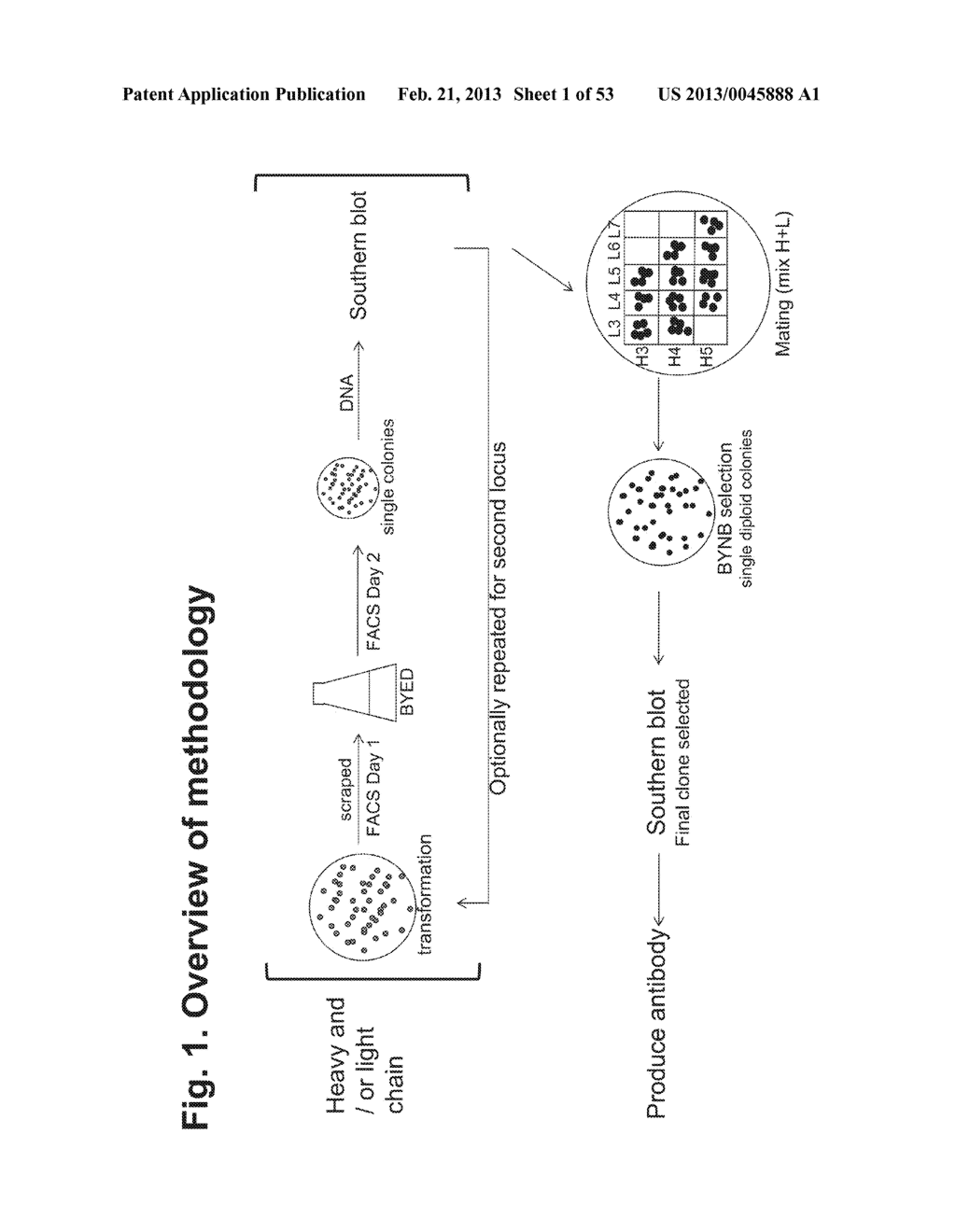 MULTI-COPY STRATEGY FOR HIGH-TITER AND HIGH-PURITY PRODUCTION OF     MULTI-SUBUNIT PROTEINS SUCH AS ANTIBODIES IN TRANSFORMED MICROBES SUCH AS     PICHIA PASTORIS - diagram, schematic, and image 02