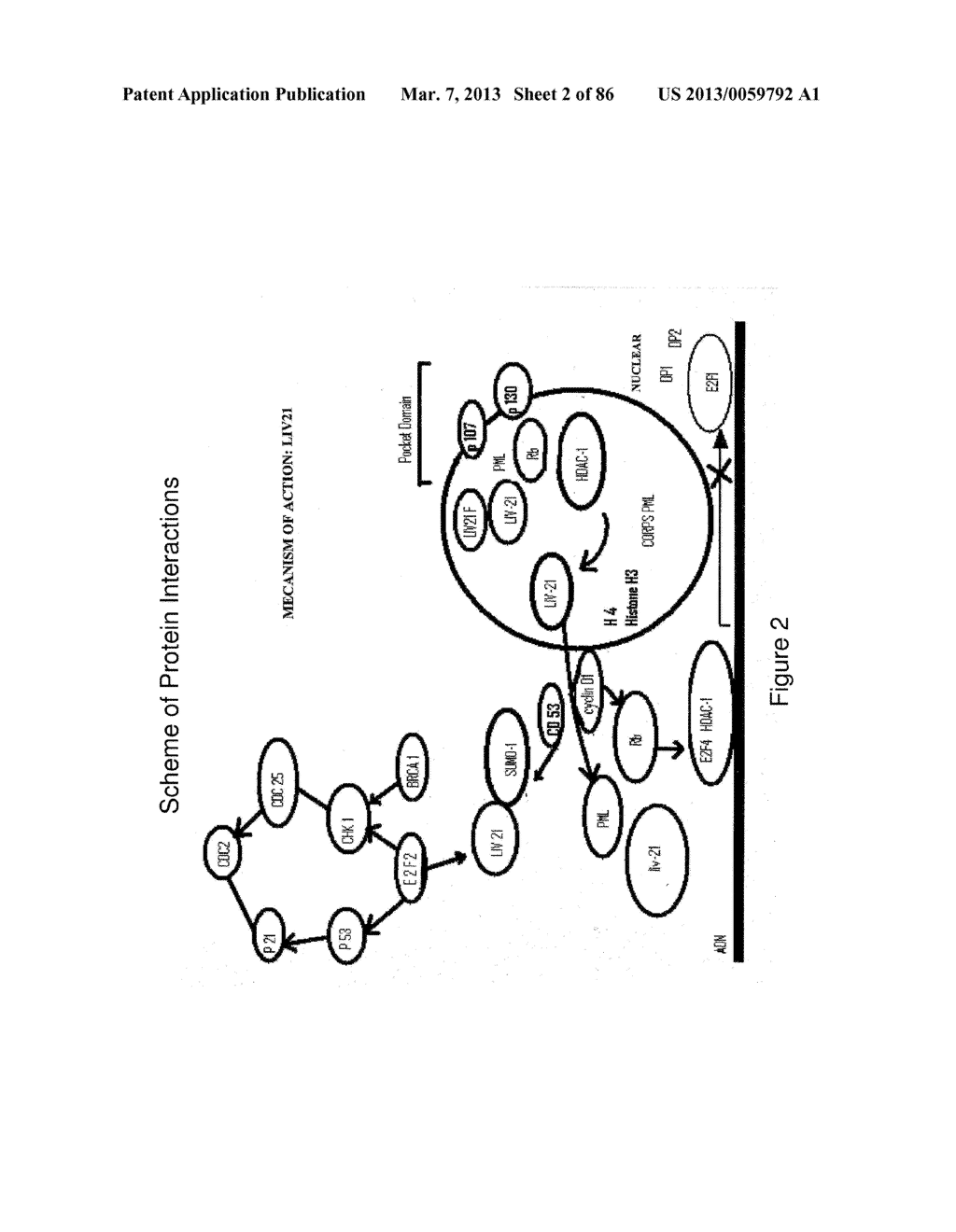 Traceability of Cellular Cycle Ano - diagram, schematic, and image 03