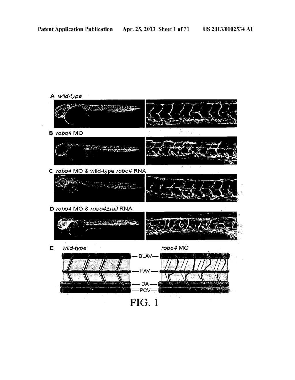 COMPOSITIONS AND METHODS FOR TREATING PATHOLOGIC ANGIOGENESIS AND VASCULAR     PERMEABILITY - diagram, schematic, and image 02