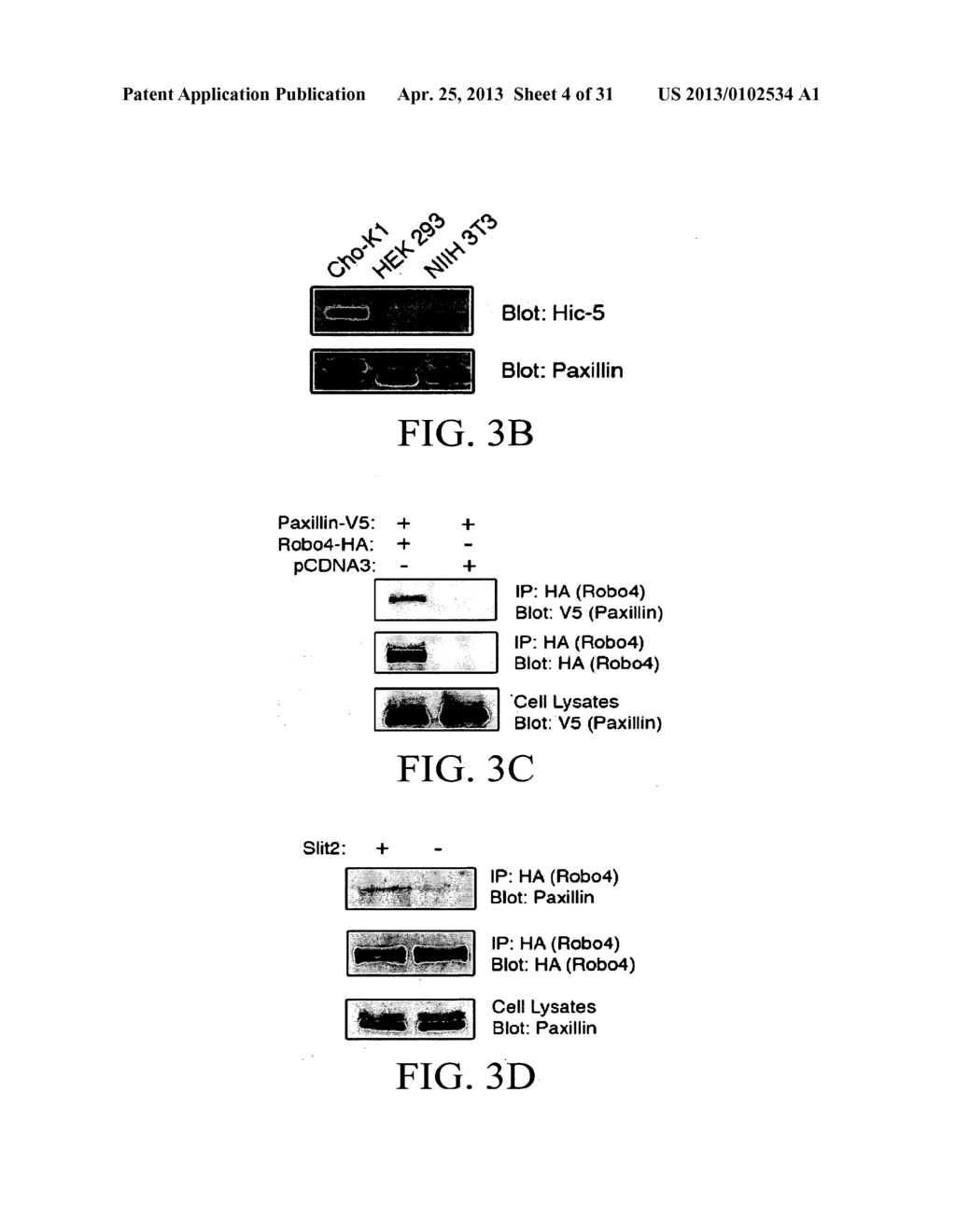 COMPOSITIONS AND METHODS FOR TREATING PATHOLOGIC ANGIOGENESIS AND VASCULAR     PERMEABILITY - diagram, schematic, and image 05