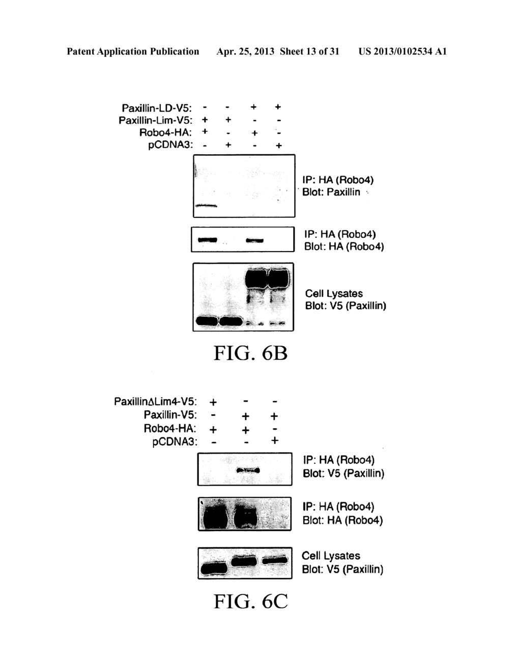 COMPOSITIONS AND METHODS FOR TREATING PATHOLOGIC ANGIOGENESIS AND VASCULAR     PERMEABILITY - diagram, schematic, and image 14