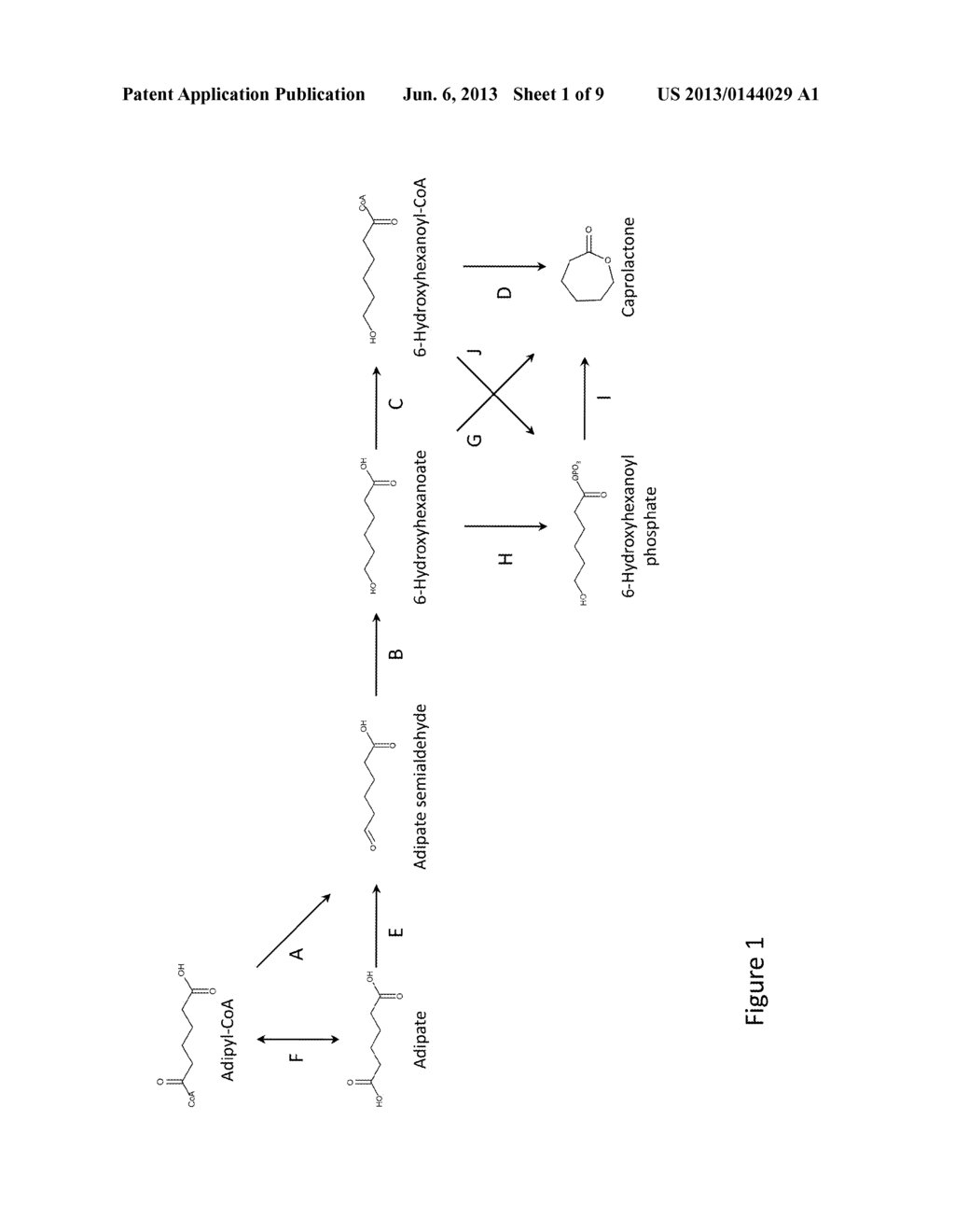 MICROORGANISMS AND METHODS FOR THE PRODUCTION OF CAPROLACTONE - diagram, schematic, and image 02