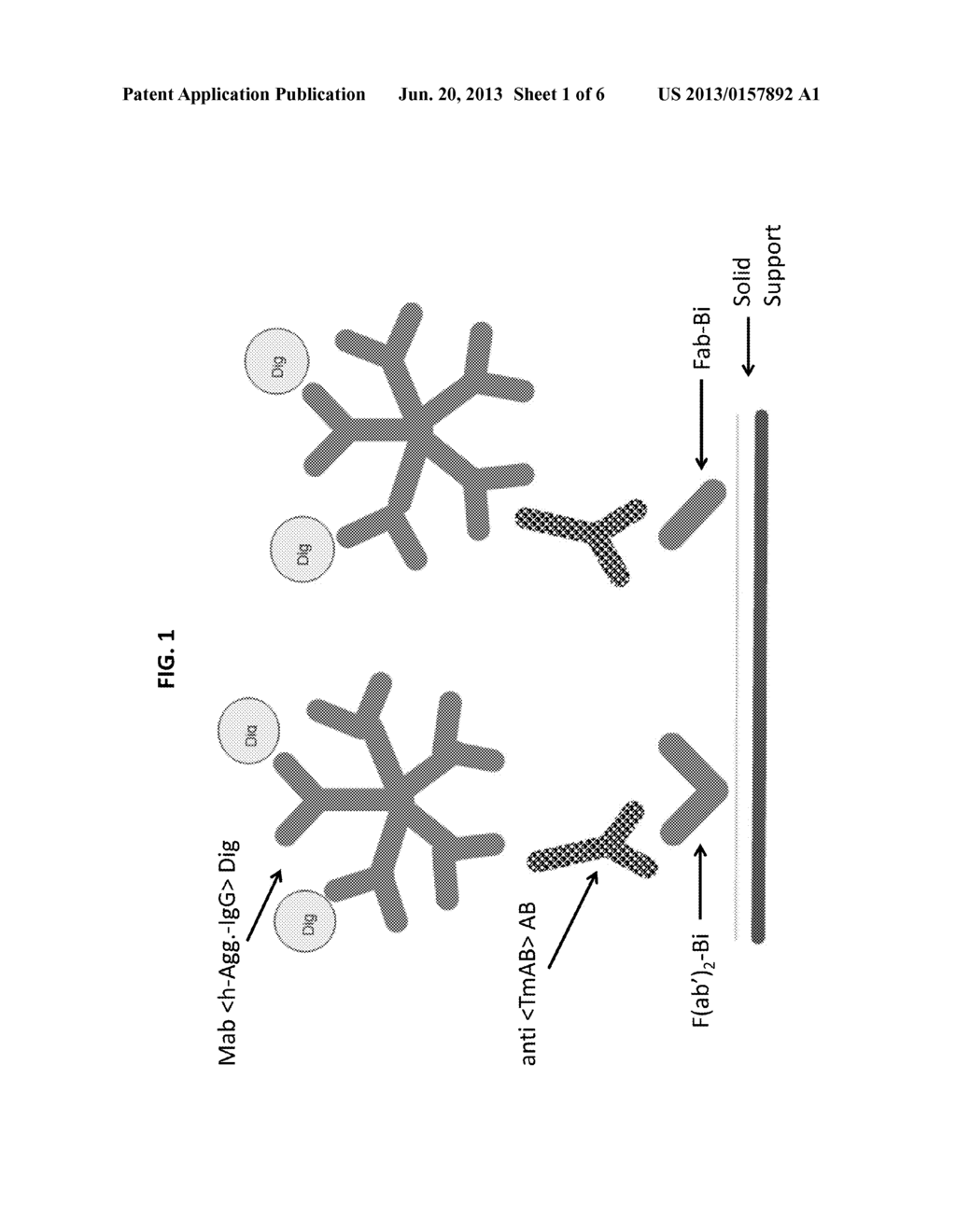 ASSAY FOR MEASUREMENT OF ANTIBODIES BINDING TO A THERAPEUTIC MONOCLONAL     ANTIBODY - diagram, schematic, and image 02
