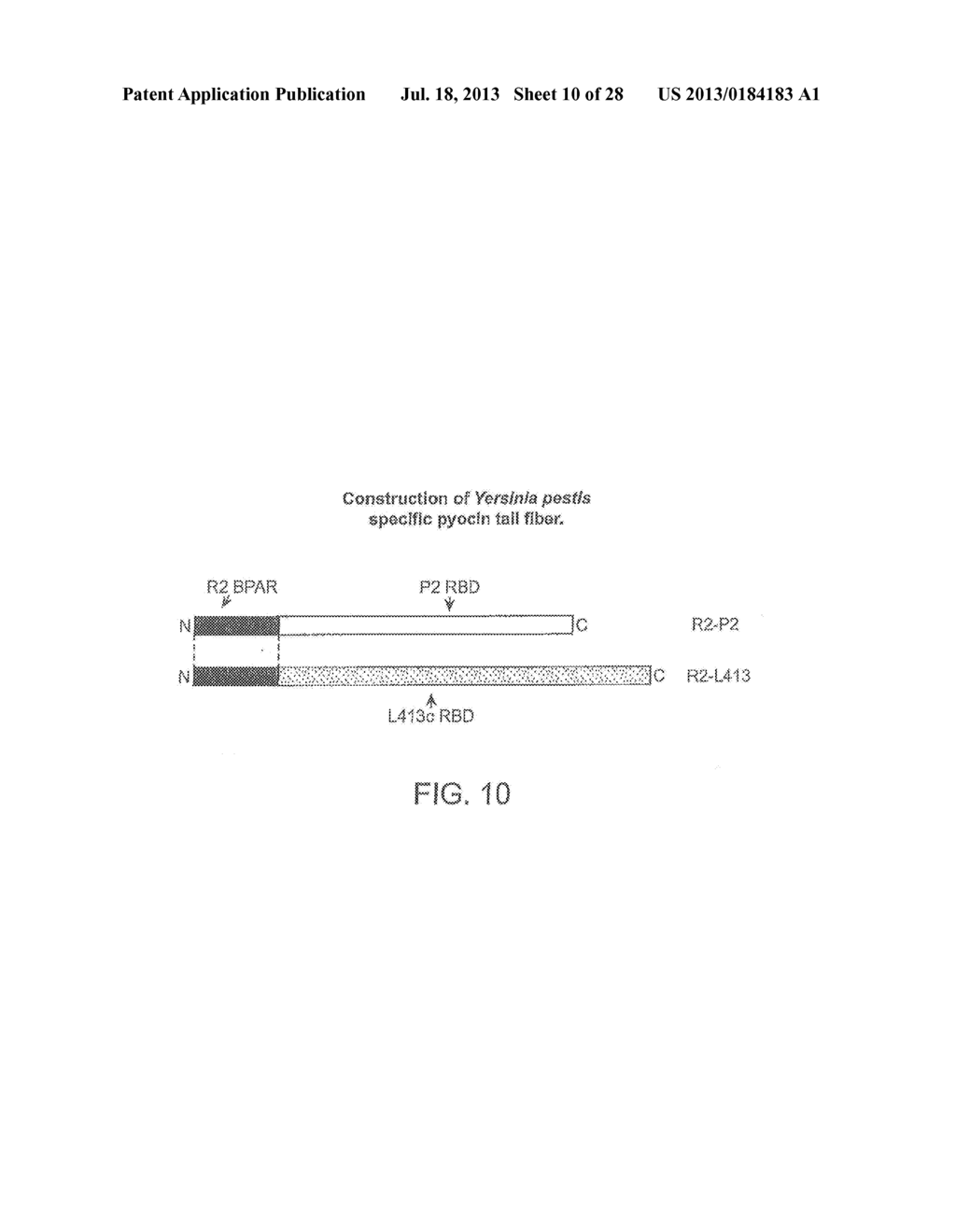 RECOMBINANT BACTERIOPHAGE AND METHODS FOR THEIR USE - diagram, schematic, and image 11