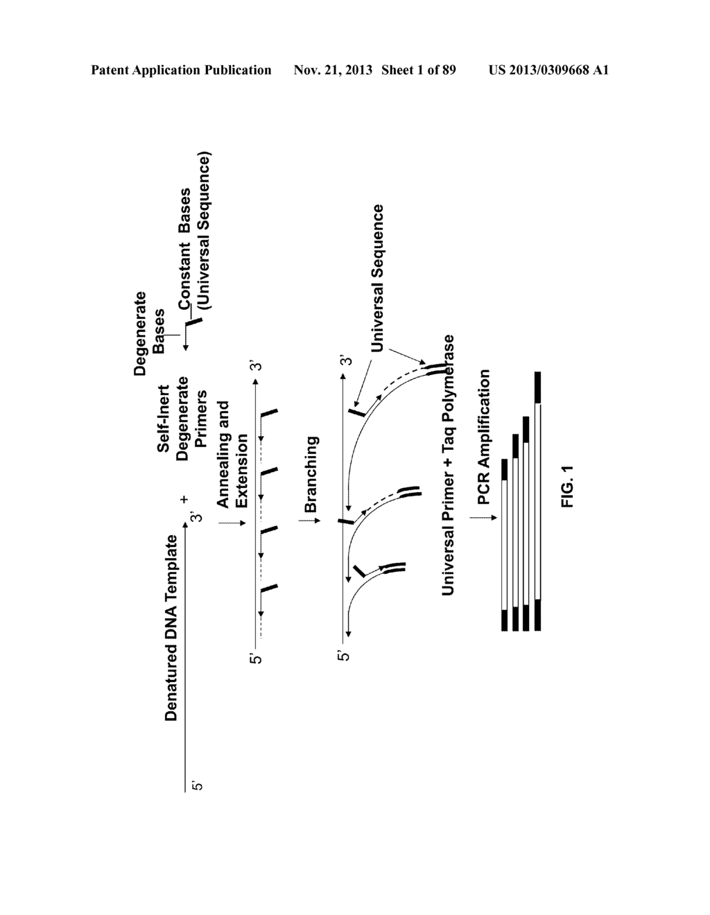 METHODS AND COMPOSITIONS FOR GENERATING AND AMPLIFYING DNA LIBRARIES FOR     SENSITIVE DETECTION AND ANALYSIS OF DNA METHYLATION - diagram, schematic, and image 02