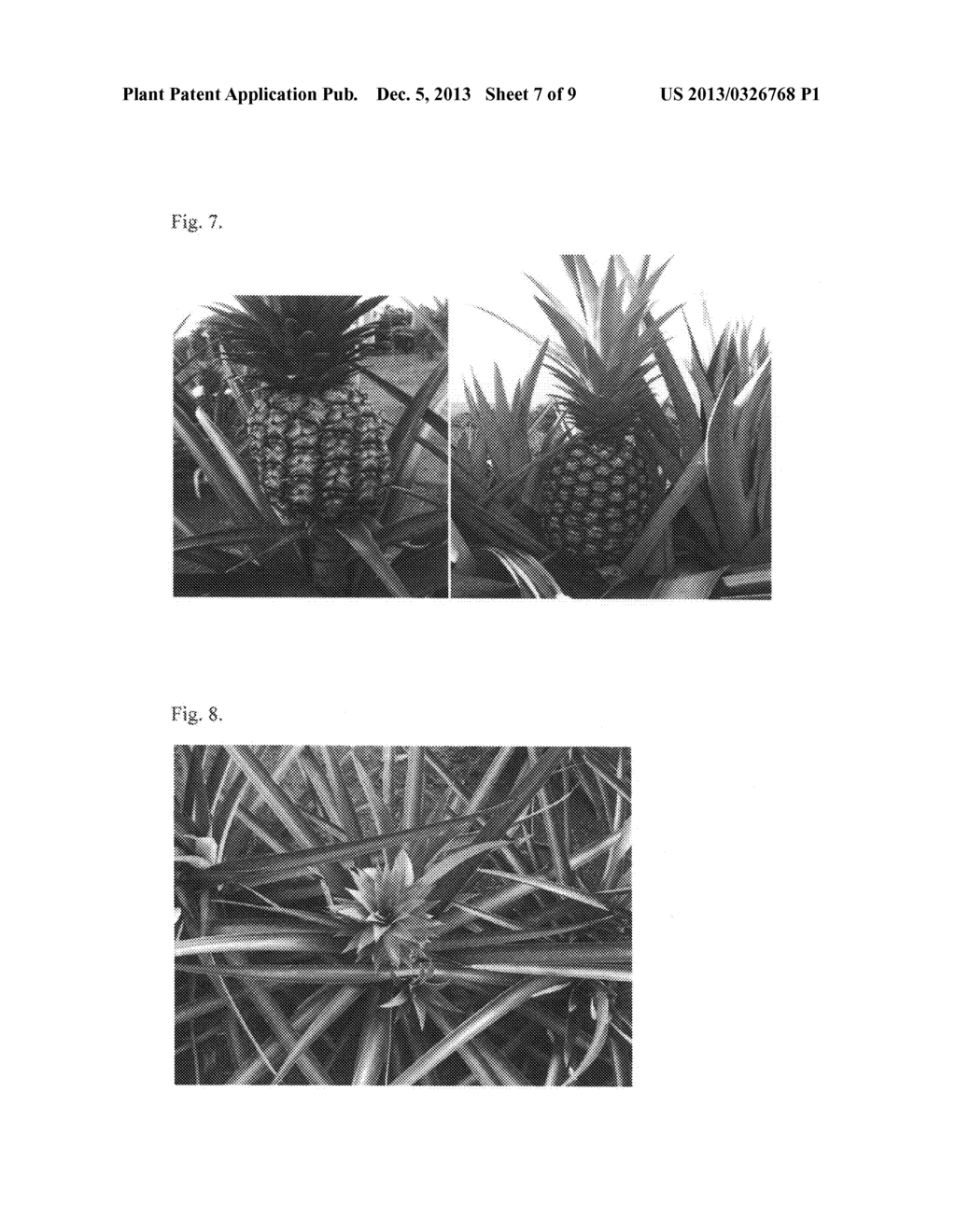 Pineapple plant named Rose (EF2-114) - diagram, schematic, and image 21
