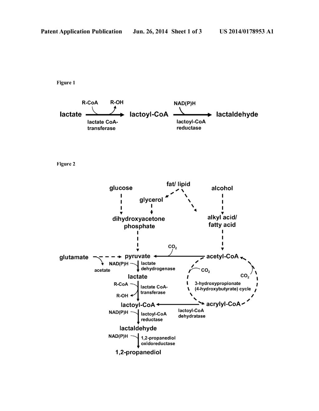 NEW MEANS AND METHODS FOR PRODUCING PROPANEDIOL - diagram, schematic, and image 02