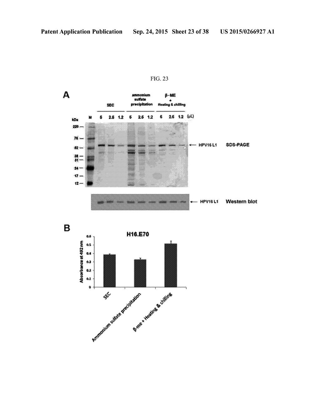 HIGH EFFICIENCY METHOD FOR PURIFYING HUMAN PAPILLOMAVIRUS VIRUS LIKE PARTICLES